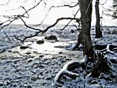 Protected species rich broad-leaved deciduous forest on Puhtu peninsula, Matsalu National Park. Virtsu, Estonia