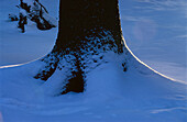 Trunk of Spruce with snow. Germany