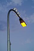 Seagulls sitting on a streetlamp at Ratisbone (Regensburg). Upper Palatinate. Bavaria. Germany.
