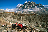 Loaded yak caravan under Wedge Peak. Lhonak. Kangchenjunga. East Nepal