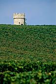 Weinberg Dalsheimer Hubacker mit Turm der Fleckenmauer im Hintergrund, Flörsheim-Dalsheim, Rheinhessen, Rheinland-Pfalz, Deutschland
