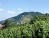 View over vineyard to castle Starkenburg, Heppenheim, Hesse, Germany