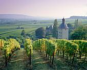 Vollrads castle, Oestrich-Winkel, Rheingau, Hesse, Germany