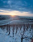 Vineyard Fellbacher Lammler in winter, Fellbach, Baden Württemberg, Germany