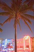 Palm tree and illuminated hotels at art-deco district at night, Ocean Drive, Miami Beach, Florida, USA