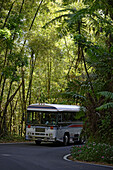 A bus driving on a street at El Yunque National Park, Cordillera Central, Puerto Rico, Carribean, America