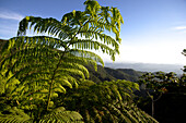 Fern and mountain scenery under blue sky, Cordillera Centra, Puerto Rico, Carribean, America