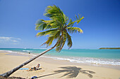 Man and palm tree at Tres Palmitas beach under blue sky, Puerto Rico, Carribean, America