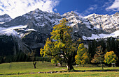 herbstlich verfärbte Ahorn, hinten Rauhkarlspitze und Kaltwasserkarspitze verschneit, kleiner Ahornboden, Karwendel, Tirol, Österreich