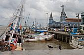Aasgeier lungern vor Fischerbooten im Hafen nahe Mercado Ver O Peso Markt, Belem, Para, Brasilien, Südamerika