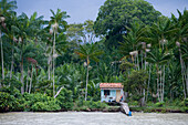 House on stilts along the Amazon River and Tropical Rainforest, Combo Island, near Belem, Para, Brazil, South America
