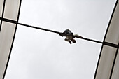 Man climbing on courtyard roof structure of the Dar Zamaria Martini Hotel, Aleppo, Syria, Asia