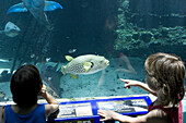 Two girls looking at fishes at the Reef HQ aquarium, Townsville, Queensland, Australia