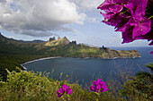 Purple blossoms and Akapa Bay on Nuku Hiva, Marquesas Islands, Polynesia, Oceania