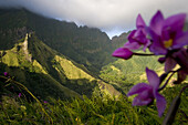 Purple blossom and mountain peak of Havavave under clouds, Fatu Hiva, Marquesas, Polynesia, Oceania
