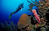 Scuba diver and coral reef, Netherlands Antilles, Bonaire, Caribbean Sea
