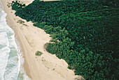 Kobi Bay coastal forest. Maputaland. South Africa.
