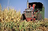 Harvesting corn and milo. Jefferson County, Nebraska. USA.