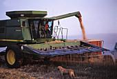 Agricultural machinery, Agriculture, Cereal, Cereals, Color, Colour, Combine, Combine harvester, Combine-harvester, Combines, Country, Countryside, Dog, Dogs, Exterior, Farm, Farm boy, Farm equipment, Farm implements, Farm machinery, Farmer, Farmers, Far