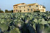 Farmhouse in market garden, Alboraya. Valencia province, Comunidad Valenciana, Spain
