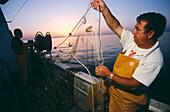 Fishing prawns in the Mediterranean sea. Castellon coast. Comunidad Valenciana, Spain