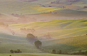 Morning mist in valley. Val d Orcia. Siena province. Tuscany. Italy.