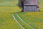 Track through meadow in spring. Allgäu (Allgaeu / Allgau), Bavaria, Germany, Europe.