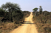 Africa, Color, Colour, Daytime, Empty road, Empty roads, Exterior, Horizon, Horizons, Immense, Immensity, Landscape, Landscapes, Mala Mala, Mala Mala Game Reserve, Nature, Nobody, Outdoor, Outdoors, Outside, Road, Roads, Scenic, Scenics, South Africa, St