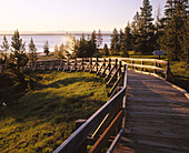 Boardwalk at West Thumb Geyser Basin, Yellowstone Lake. Yellowstone National Park. Teton County. Wyoming. USA.