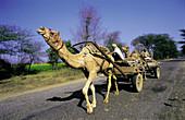Peasants transporting wood. Rajasthan. India