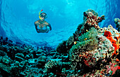 Snorkeling over Coral Reef, Maldives, Indian Ocean, Ari Atoll