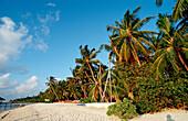 Catamaran at Beach, Maldives, Indian Ocean, Medhufushi, Meemu Atoll