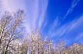 Winter skies. Warren. Ontario. Canada