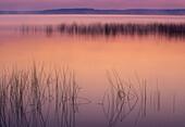 Ontario wetland scenic. Lake Mindemoya with reed bed before sunrise. Manitoulin Island. Ontario. Canada.