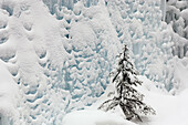 Frozen waterfall with fresh snow and spruce tree in Johnston Canyon. Banff National Park, Alberta, Canada