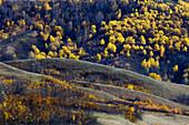 Qu Appelle Valley landforms with autumn aspens and shrubs. Saskatchewan