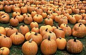 Pumpkins at farmer s market. Fall in New England. USA.