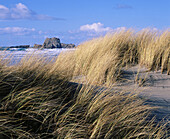 Dune grass on sandy beach at Bandon. Coos County. Southern Oregon coast. USA
