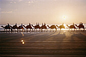 Animal, Animals, Arabian Camel, Beach, Beaches, Camels, Caravan, Caravans, Coast, Coastal, Color, Colour, Daytime, Dromedaries, Dromedary, Exotic, Exterior, Horizon, Horizons, Horizontal, Human, Light, Outdoor, Outdoors, Outside, People, Person, Persons,