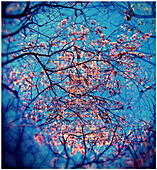 Branch, Branches, Color, Colour, Daytime, Distorted, Distortion, Exterior, Fish eye, Fish-eye, Fisheye, Flower, Flowers, Low angle view, Nature, Outdoor, Outdoors, Outside, Plant, Plants, Season, Seasons, Special effects, Spring, Springtime, Tree, Trees,
