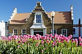 Tulips and a dutch historic building in Pella, Iowa, USA.