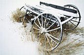 Old wagon in winter. Bannack ghost town. Montana. USA