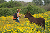 Encounter with a donkey, woman hiking near the Baths of Aphrodite, Akamas Nature Reserve Park, South Cyprus, Cyprus