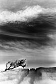 Aussen, Baum, Bäume, Darüber hinaus, Draussen, Entfernt, Feld, Felder, Fern, Himmel, Horizont, Horizonte, Land, Landschaft, Landschaften, Menschenleer, Monochrom, Monochromatisch, Natur, Naturerscheinung, Niemand, Ökosystem, Ökosysteme, Schwarzweiss, Spu