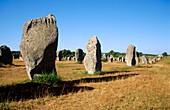 Megalithic stones in Le Menec. Carnac. Bretagne. France