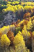 Deciduous trees. Isábena valley. Pirineo Aragonés. Huesca province. Spain.