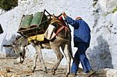 Donkey carrying butane bottles. Chefchaouen. Morocco
