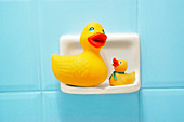 Bathroom, Bathrooms, Close up, Close-up, Closeup, Color, Colour, Concept, Concepts, Duck, Ducks, Families, Family, Horizontal, Hygiene, Indoor, Indoors, Inside, Interior, Object, Objects, Pair, Rubber duck, Still life, Thing, Things, Toy, Toys, Two, Two