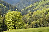 Harz low-mountain range. Germany