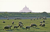Bay of Mont Saint Michel invaded by the highest tides in Europe. The tides comes in at one metre per second as swifly as a galloping horse (Victor Hugo). Manche. Normandy. France.